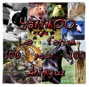 Les logos [TERMINE] - Page 3 Yanimoo-le-forum-100-pour-1